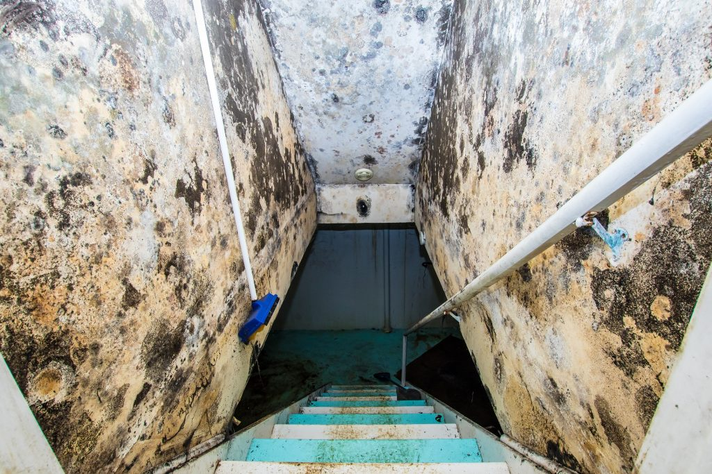Mold Remediation in Cape Coral
